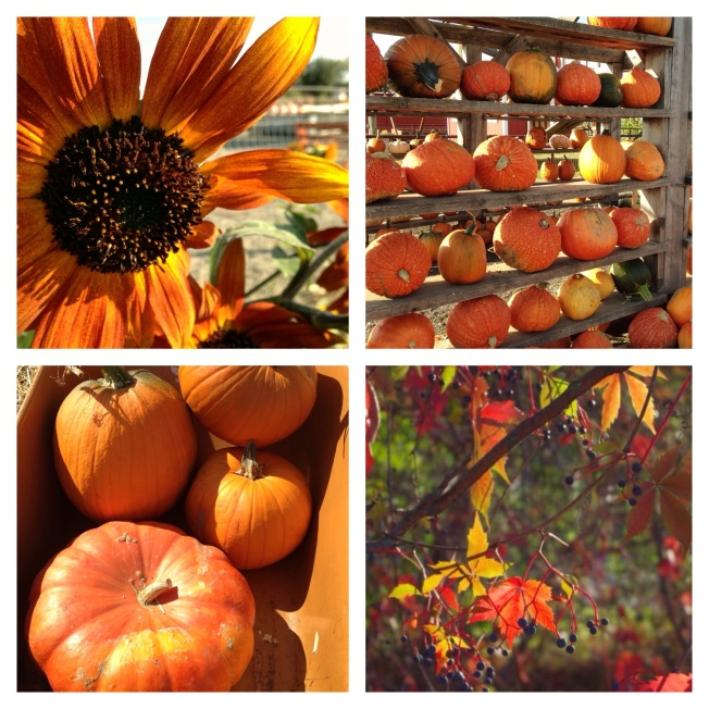 Autumn Beauty Collage - photos by Michelle Fairchild