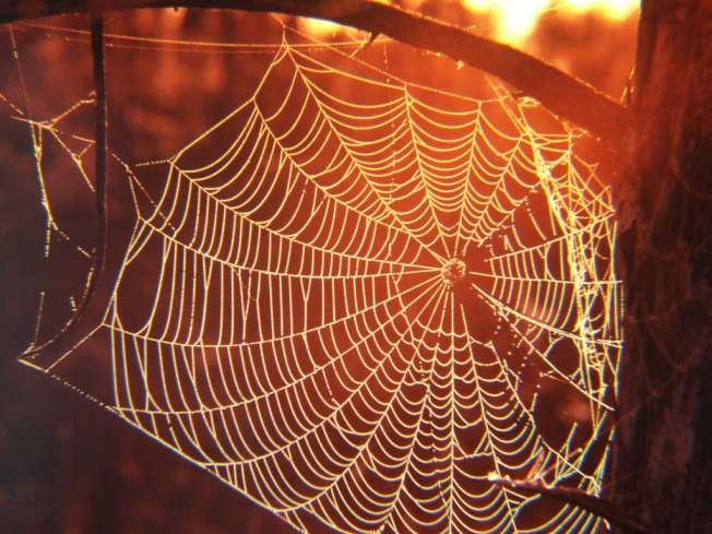 Spider Web 3