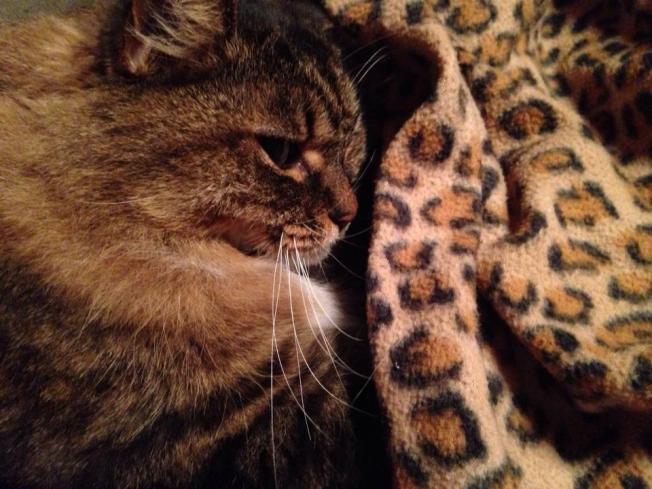Bandito at 16 years old